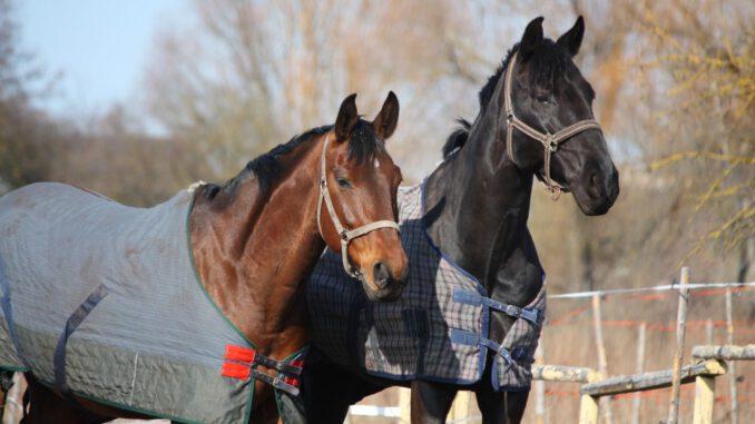 paardendeken